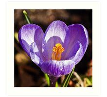 Purple Spring Art Print