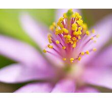 Lavender Star Photographic Print