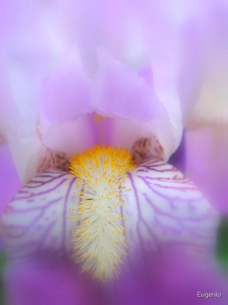 Deep purple softness by Eugenio