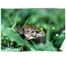 Bali Frog Poster