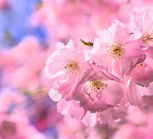 Spring 2010 Blossoms by Moetran