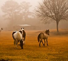 Horses in the morning mist by carlosramos