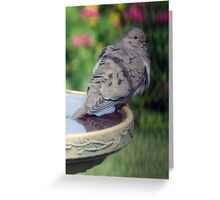 Cooling One's Tail Feathers Greeting Card