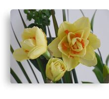 Orange and Yellow Spring flowers Canvas Print
