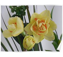 Orange and Yellow Spring flowers Poster