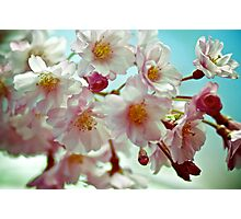 Close-up of Cherry Blossom. Queens Botanical Garden Vintage Retouched Photographic Print