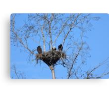 the eagle family Canvas Print