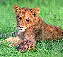 Lion cub and tortoise by leksele