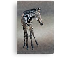 Dreams in Black and White (Grevy's Zebra) Canvas Print