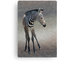 Dreams in Black and White (Grevy's Zebra) Canvas Print