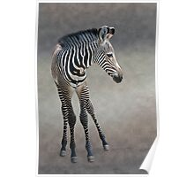 Dreams in Black and White (Grevy's Zebra) Poster