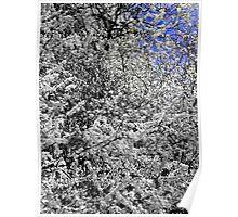 Sky and Spring Blossom  Poster