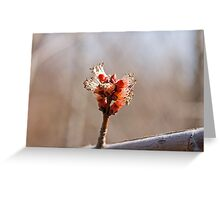 Maple Bud Greeting Card
