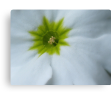 A Touch of Spring - JUSTART ©  Canvas Print