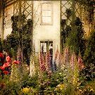 Darwin's Garden by Jessica Jenney