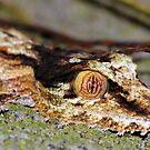 MASTER OF CAMOUFLAGE by mc27