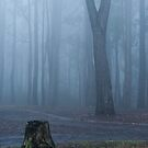 A walk in the woods by DavidsArt