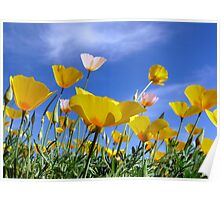Poppies and Blue Arizona Sky Poster