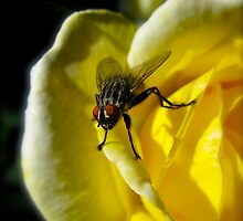 Beauty and the Beast (March Fly) by ~ FireFern Creations ~