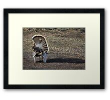 Just Me and My Shadow, Wild Turkey Style Framed Print