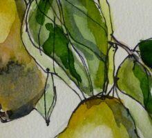 Pears. Detail.  Sticker
