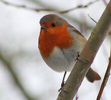 Robin 2 by Blayde666