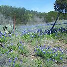 Bluebonnets in Hill Country by icesrun