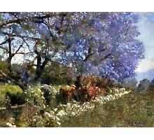 Fairytale Lane Photographic Print