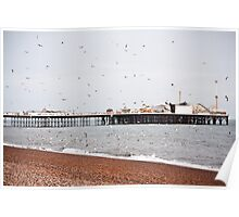 Birds in Brighton Poster