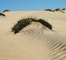 Dune Blooms by Karen Zimmerman