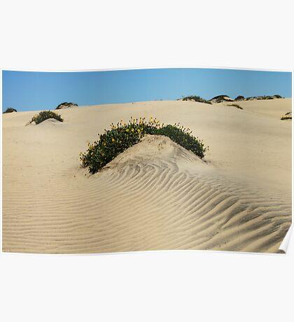 Dune Blooms Poster