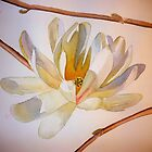 Magnolia III, watercolor on paper by Sandrine Pelissier