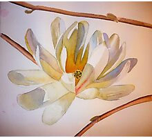 Magnolia III, watercolor on paper Photographic Print