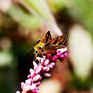 Here's the nectar by john  Lenagan