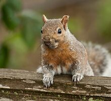 A Squirrel in Spring by David Friederich