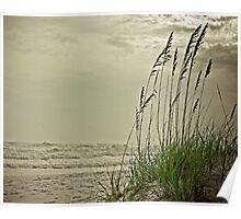 Evening Reeds Poster