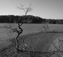 Lakeside- Out on a Limb by Timothy Eric Hites