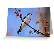 Tree Swallow on Red Maple Branch - Ottawa Ontario Greeting Card