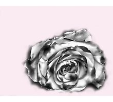 I was dreaming of a rose Photographic Print