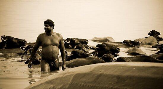 Washing buffalos by wudzys