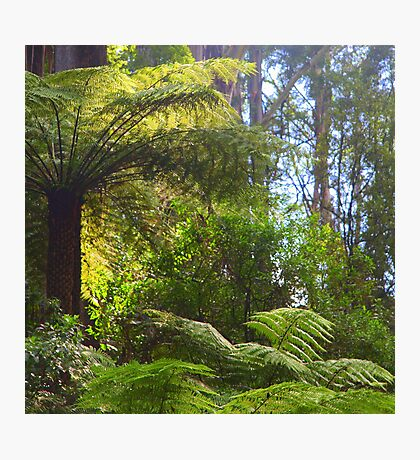 A ferny glade awaits... Photographic Print