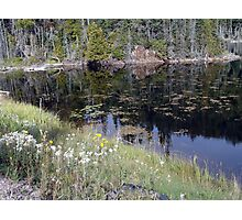 Wildflowers of Northern Ontario Photographic Print