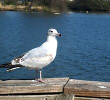 Hello,Mr Seagull by melly07