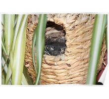Baby Birds in a Nest Poster