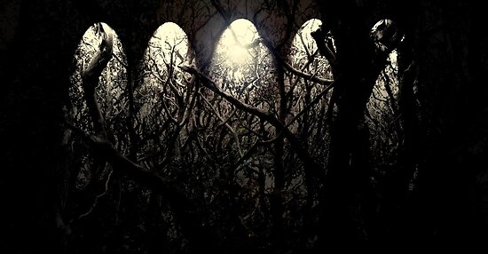 Twisted Forest  by Louise Linossi Telfer
