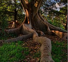 Tree Roots Plus by Dianne English