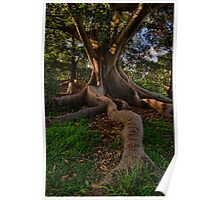 Tree Roots Plus Poster