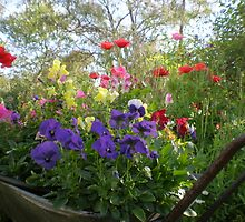 wheelbarrow of flowers by joycee