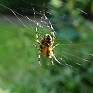 Spiders Web I by shane22