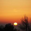 Sunrise by shane22